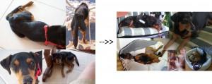 Henry todkrank in Limassol gefunden und vor der Tötungsstation gerettet -->> Nach den Behandlungen wieder ein gesunder und aktiver Hund
